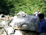 Osmancık Orman İşletme Şefliğinde Kayın Kesimi