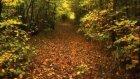 Burak Kut Sonbahar