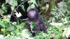 Bebek Gorilin Komik Hali