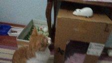 kedi boncuk evini çok seviyor