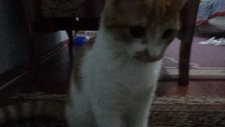 sevimli kedi boncuk