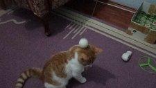 Kedi Boncuk Top Peşinde