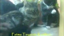 kedi koşuyor!!!