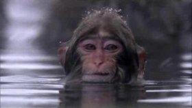 BBC | Hayat: 10- Primatlar