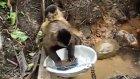 bulaşık yıkayan maymun