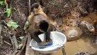 ev hanımı maymun bulaşık yıkıyor