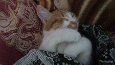 kedi boncuk üşümesin