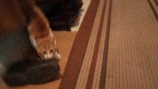 kedi boncuk kameradan korkuyor
