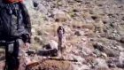 setter ateş tavşan avı
