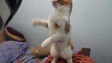 kedi boncuk lastik peşinde 2