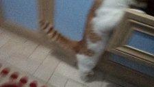 meraklı kedi boncuk