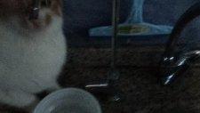 kedi boncuk su içiyor