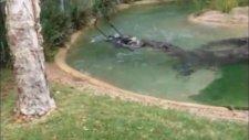 çim biçme makinesini timsaha kaptırdı