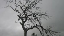 sarah brightman gloomy sunday