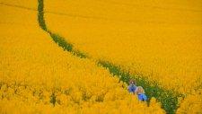 Fields Of Gold 0001