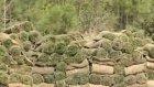 Hazır doğal rulo çim nasıl döşenir - tennar çim