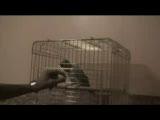 papağan tuvalet eğitimi