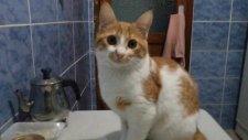kedi boncuk video ve resimler