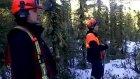 Ormanda Tuhaf Sesler !