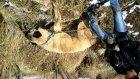 12 aylık kopra enik karşıda köpek var..
