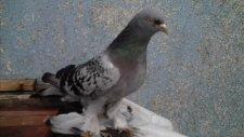 çankırılı mustafanın kuşları (2)