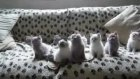 Kafaları Görelim Bu Kedicikler Bir Harika