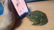 bu kurbağa çok marifetli