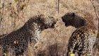Kedıler sehrı bolum 1