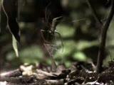 örümceğin akıllı tuzağı