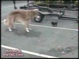 komik köpekler sakarlıkları