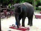 masaj yapan fil