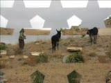 Köyün İnsanları Kılavuz Köyü İnsanları  Bor Niğde(