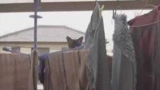 Uzun Atlamada Başarısız Kedi