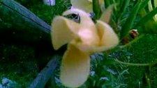 Akşam Ezanı Okunurken Açan Çiçek