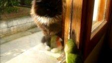 Kedi Kuştan Korktu
