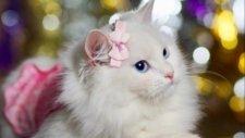 Sevimli Dostlarımız Kediler