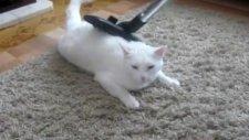 Kedinin süpürge masajı