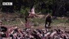Flamingoyu Havada Yakaladı!