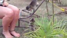Yavru maymun kediyle oynuyor
