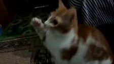 Kedi Boncuk İplik peşinde