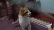 Kedi Boncuk Ve Buhar Makinesi