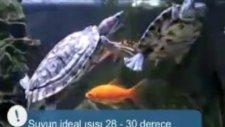 Kaplumbağa evin neresinde durmalı