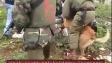 İsrail Askerlerinin Köpekli İşkencesi