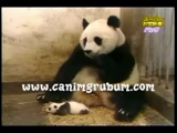 Panda hapşurursa :)