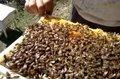 Arıcılık İlk Bahar Bakımı 2012