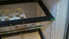 Buzdolabından Kuluçka Makinası Yapımı