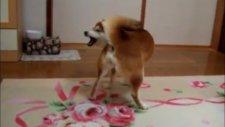 Kuyruğuna Kızan Köpek