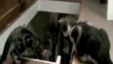 Kedi kediyi merdivenden itekledi kedi arkadaşini merdivenden itti