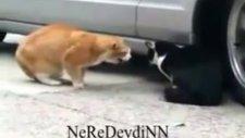 sevgilisine kızan kedi
