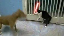 Kedi Köpek - StarWars